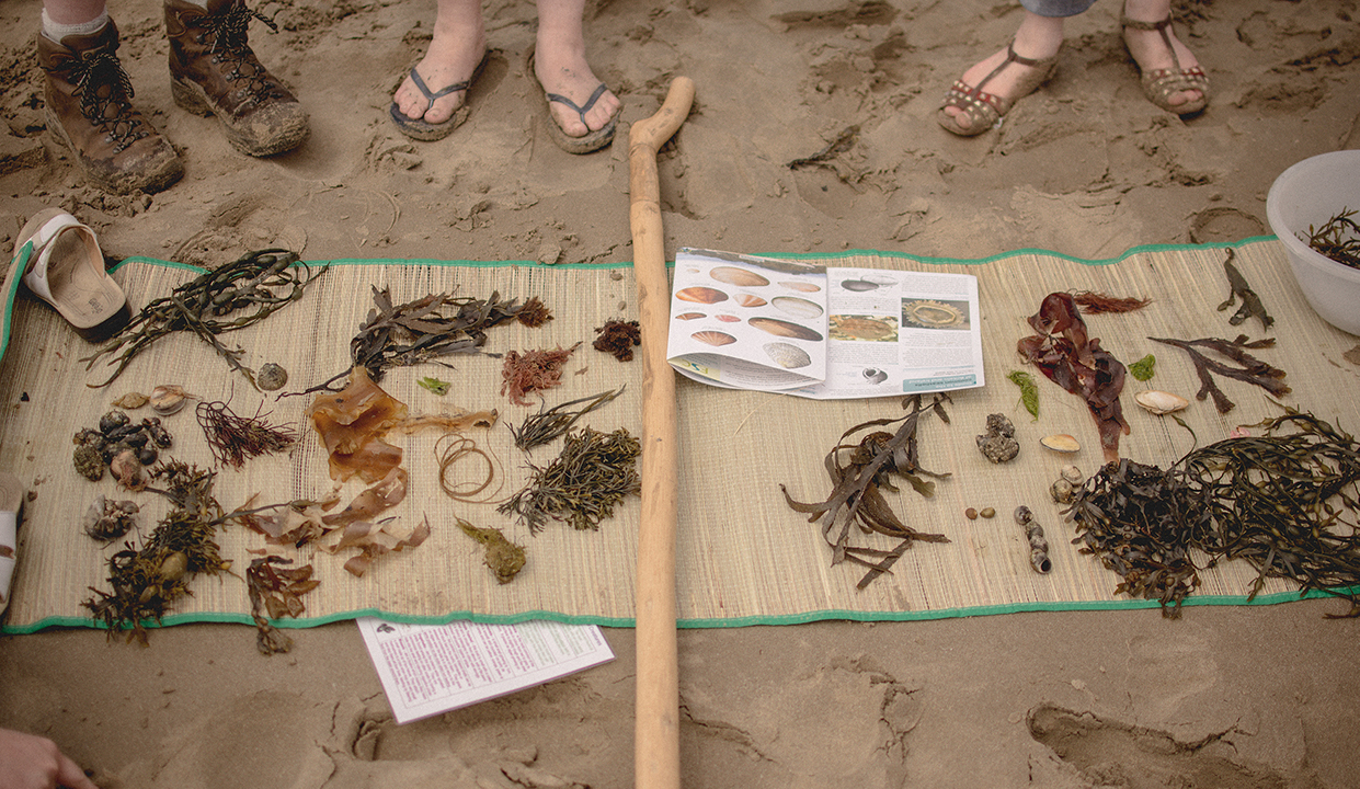 beginner coastal foraging course uk