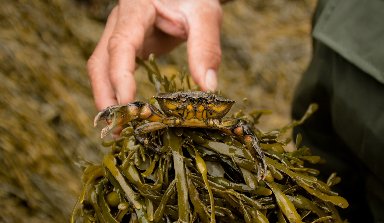 coastal foraging guide course